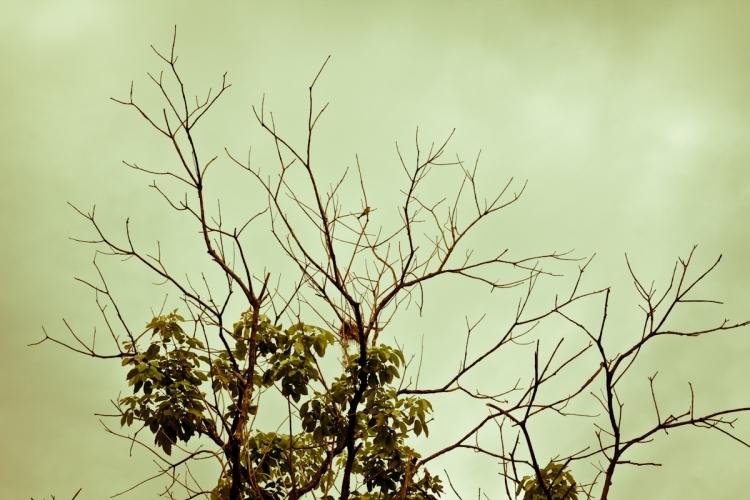 Dia do Fotógrafo-4-3